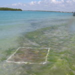 Seagrass survey